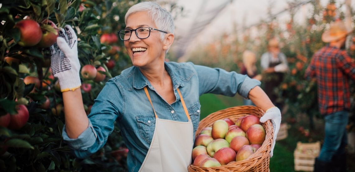 a senior woman picking apples and volunteering in a community garden